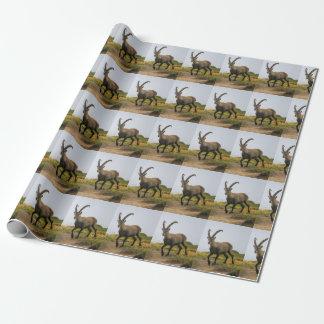 Papel De Presente Íbex selvagem alpino, da cabra, ou steinbock