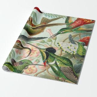 Papel De Presente Impressão da arte de Ernst Haeckel: Trochilidae