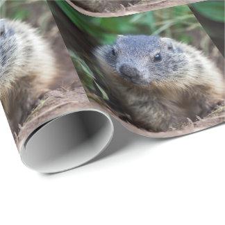 Papel De Presente Papel de envolvimento curioso da marmota do bebê