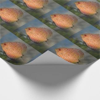 Papel De Presente Papel de envolvimento de pedra do disco do pombo