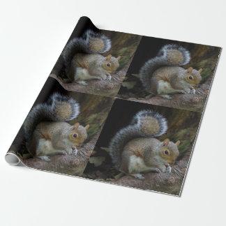 Papel De Presente Papel de envolvimento do esquilo