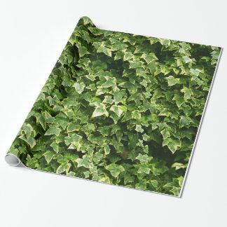 Papel De Presente Parede das folhas da hera