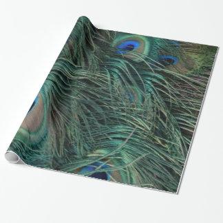 Papel De Presente Penas magníficas do pavão
