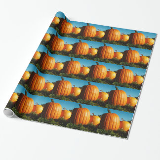 Papel De Presente Pumpkins_Hancock_Shaker_village_2418
