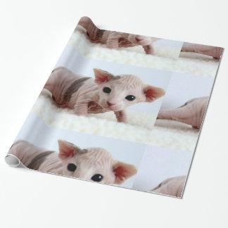 Papel De Presente Sphynx kitten.png