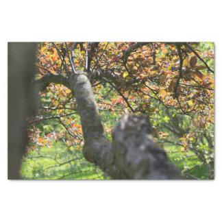 Papel De Seda Árvore na fotografia do outono