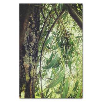 Papel De Seda Árvores da selva
