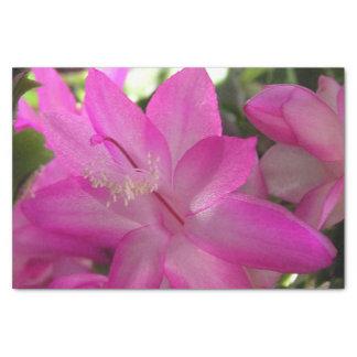 Papel De Seda Cacto cor-de-rosa