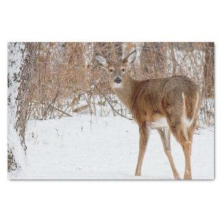 Papel De Seda Cervos do fanfarrão do botão no campo nevado
