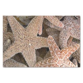 Papel De Seda Estrela do mar toda ao redor