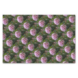 Papel De Seda flores cor-de-rosa com orvalho
