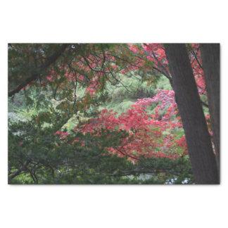 Papel De Seda Floresta do outono