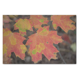Papel De Seda Folhas de outono