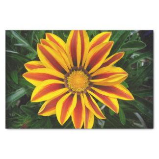 Papel De Seda Foto alaranjada bonita da flor de Sun