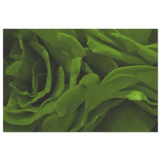 Papel De Seda Foto aveludado da flor dos rosas da verde azeitona