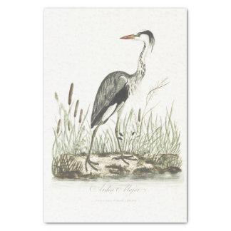 Papel De Seda Garça-real da terra comum da ilustração do pássaro
