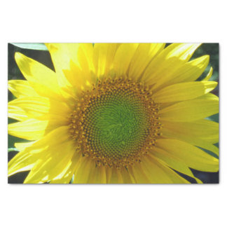 Papel De Seda Girassol amarelo brilhante