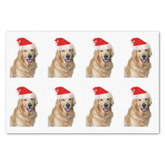 Papel De Seda Golden retriever