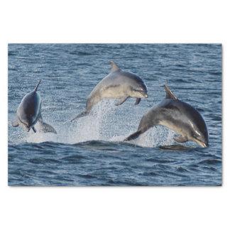 Papel De Seda Golfinhos selvagens que pulam montanhas de