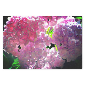 Papel De Seda Hydrangeas cor-de-rosa brilhantes