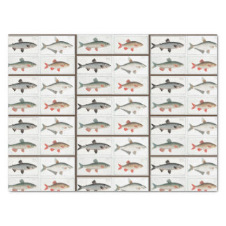 Papel De Seda Ilustrações dos peixes do vintage