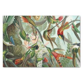 Papel De Seda Impressão da arte de Ernst Haeckel: Trochilidae