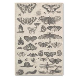 Papel De Seda Insetos Decoupage dos Lepidoptera da entomologia