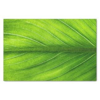 Papel De Seda Lenço de papel--Folha de palmeira