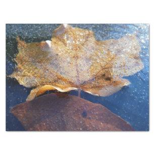 Papel De Seda Natureza amarela congelada do outono da folha de