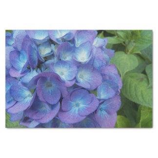 Papel De Seda O Hydrangea azul floresce floral