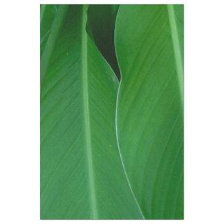 Papel De Seda O lírio de canna verde sae da foto