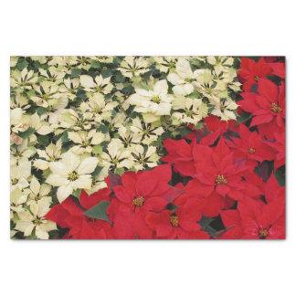 Papel De Seda Poinsétias brancas e vermelhas mim feriado floral