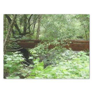 Papel De Seda Ponte das madeiras de Muir mim