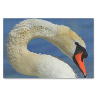 Papel De Seda Retrato de uma cisne bonita