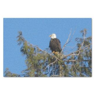 Papel De Seda Tecido americano da águia americana
