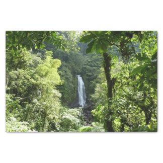 Papel De Seda Trafalgar cai fotografia tropical da floresta