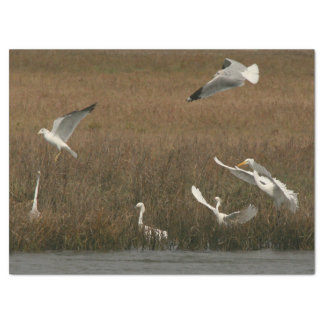 Papel de WetlandTissue dos animais selvagens dos