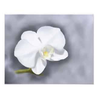 Papel profissional da foto da flor branca da impressão de foto