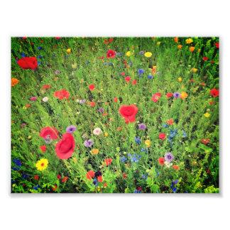 Papel profissional da foto das flores selvagens