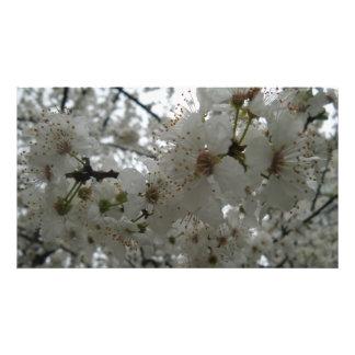 Papel profissional da foto de Kodak da flor da