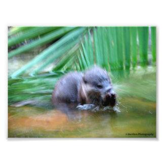 Papel profissional da foto de Kodak da lontra