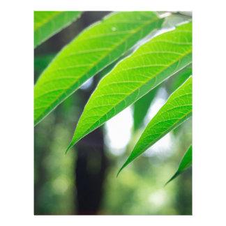 Papel Timbrado Ailanthus Defocused e borrado do ramo