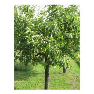 Papel Timbrado Árvore de pera com folhas do verde e frutas