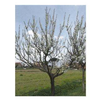 Papel Timbrado Árvore de pera de florescência no jardim Toscânia,