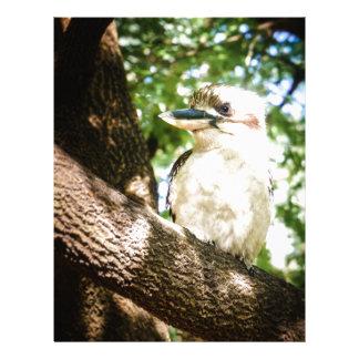 Papel Timbrado Austrália bonito Kookaburra