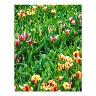 Papel Timbrado Campo com as tulipas cor-de-rosa e amarelas