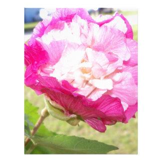 Papel Timbrado flor variável do rosa e a branca do hibiscus