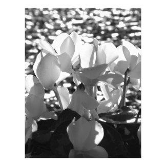 Papel Timbrado Flores brancas do cyclamen de Backlits no fundo