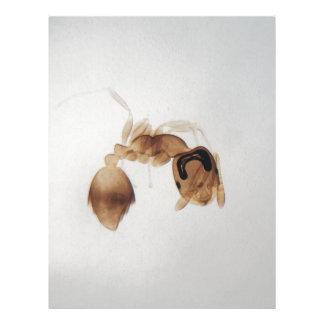 Papel Timbrado Foto do microscópio de uma formiga