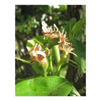 Papel Timbrado Galho da árvore de pera com os botões no primavera
